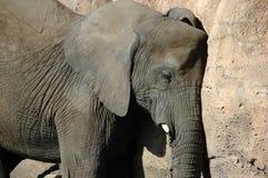 Elephant Daily Nap Stock Photo