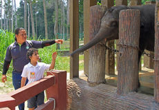 Elephant in National Conservation Centre Kuala Gandah. Kuala Gandah, Malaysia - April 6, 2015: tourists are feeding elephants in National Conservation Centre Stock Images