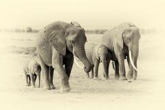 Elephant in National park of Kenya. Vintage effect Stock Photos