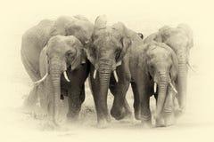 Elephant in National park of Kenya. Vintage effect Royalty Free Stock Photos