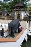 An elephant negotiates a flight of stairs within the Temple of the Sacred Tooth Relic complex in Kandy, Sri Lanka. Stock Photo