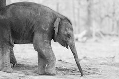 Elephant in Nepal Stock Photo