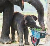 Elephant in Nepal Stock Image