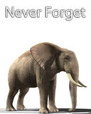 Elephant That Never Forgets Stock Photography
