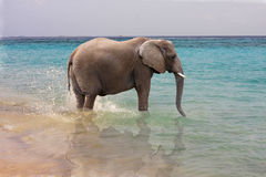 Elephant in ocean Royalty Free Stock Photo