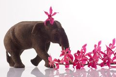 Elephant with orchid Stock Photography