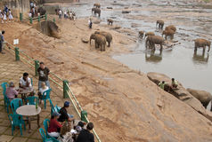 Elephant Orphanage Royalty Free Stock Photos