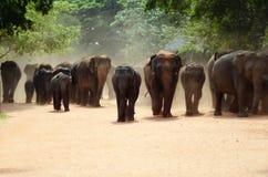 Elephant orphanage Stock Photo