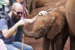 Elephant orphanage Stock Image
