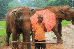 Elephant Orphanage, Sri Lanka Stock Images