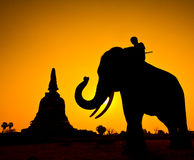 Elephant and Pagoda wiith sunset scene Stock Photography