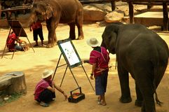 Elephant painting. Painting by an elephant at a show in an elephant park in Thailand stock photos
