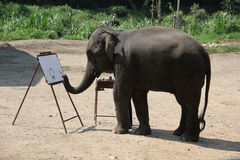 Elephant painting at Maesa Elephant Camp. Maesa Elephant Camp is an elephant camp in Chiang Mai, Thailand, and a popular tourist attraction stock photos