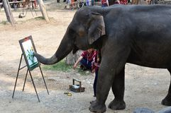 Elephant painting. A picture by using its nose in the Maesa Elephant Camp, Chiangmai, Thailand stock image