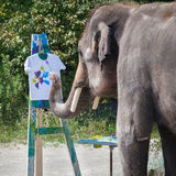 Elephant. The elephant is painting a shirt stock photo