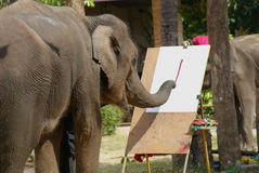 The elephant is painting show Royalty Free Stock Image