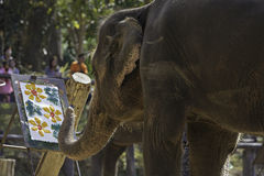 Elephant painting in Thailand. stock image