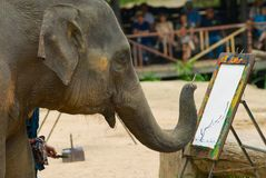 Elephant paints a picture at the elephant show in Mae Sa Elephant Camp in Chiang Mai, Thailand. stock images