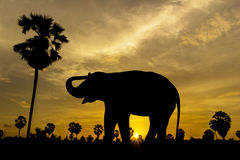 Elephant and palm tree on sunset Stock Images