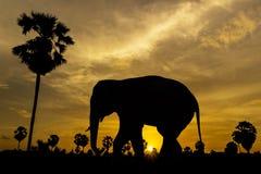 Elephant and palm tree on sunset Royalty Free Stock Photo