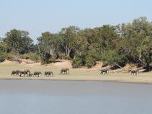 Elephant parade stock photography
