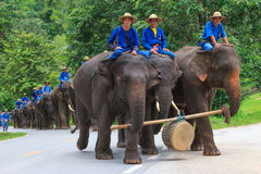 Elephant parade Stock Image
