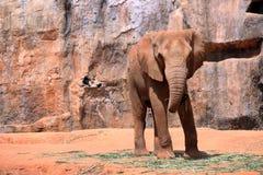 Elephant park Stock Image