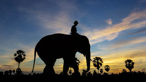 Elephant at park on twilight time Stock Image