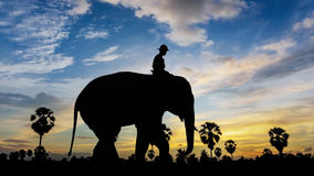 Elephant at park on twilight time Royalty Free Stock Image
