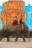 Elephant Passengers Side View Stock Photos