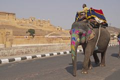 Elephant Passing Amber Fort Royalty Free Stock Photos