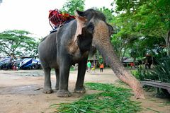 Elephant, Pattaya Stock Images