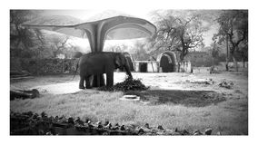 ELEPHANT PEACEFUL BLACK&WHITE. LOVELY ELEPHANT WHO IS EATING FOOD royalty free stock photos