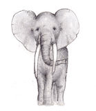 Elephant Pencil Sketch Royalty Free Stock Images