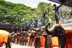 Elephant performance in Thailand travel royalty free stock photography