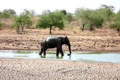 Elephant. Photo image  with wild landscape and elephant Stock Photos