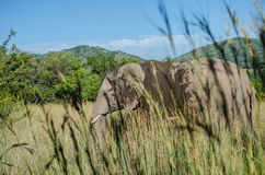 Elephant. Photo taken in Pilanesberg National Park, South Africa stock photography