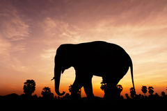 Elephant and plam tree on twilight time Royalty Free Stock Photography