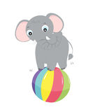 Elephant planying Stock Images