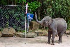 An elephant play ball Royalty Free Stock Photo
