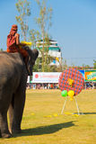 Elephant Playing Darts Balloons Rear Stock Photography