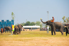 Elephant Playing Darts Balloons Side Stock Images