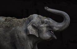 Elephant playing Stock Images