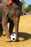 Elephant Playing Soccer Ball Grass Field Stock Image