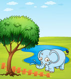 An elephant playing in a water Royalty Free Stock Photos