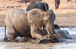 Elephant playing in water with rest Royalty Free Stock Photos