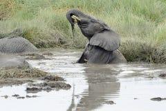 Elephant playing Stock Photo