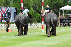 Elephant Polo Stock Image