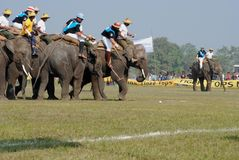 Elephant polo 3 Royalty Free Stock Images