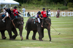 Elephant polo game. Royalty Free Stock Images